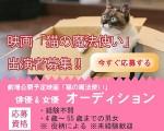 映画「猫の魔法使い」出演者募集!